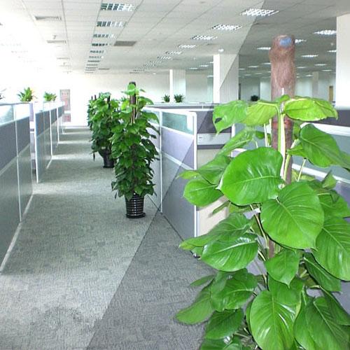 办公植物租赁
