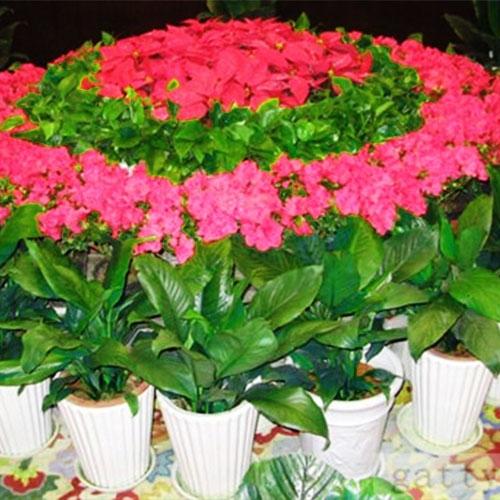 办公花卉养护