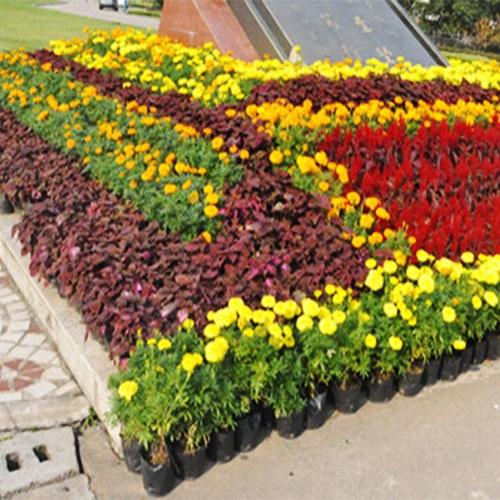 展场花卉养护