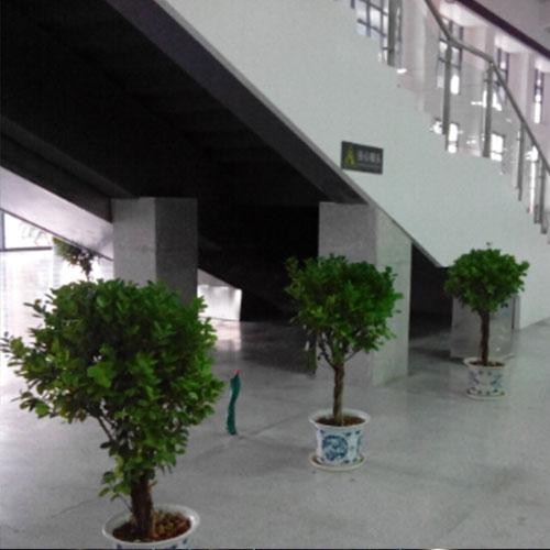 火车站植物租赁