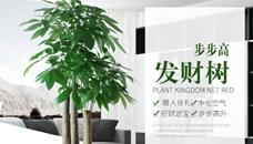 广安绿植租摆让您有个绿色办公环境舒畅心情