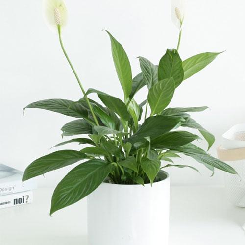 华蓥市一帆风顺【植物租赁】
